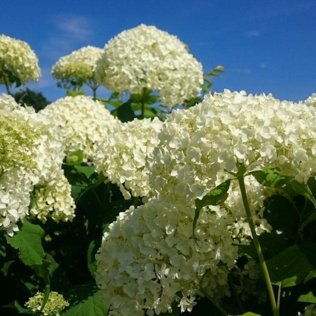 Gartenoptimierung